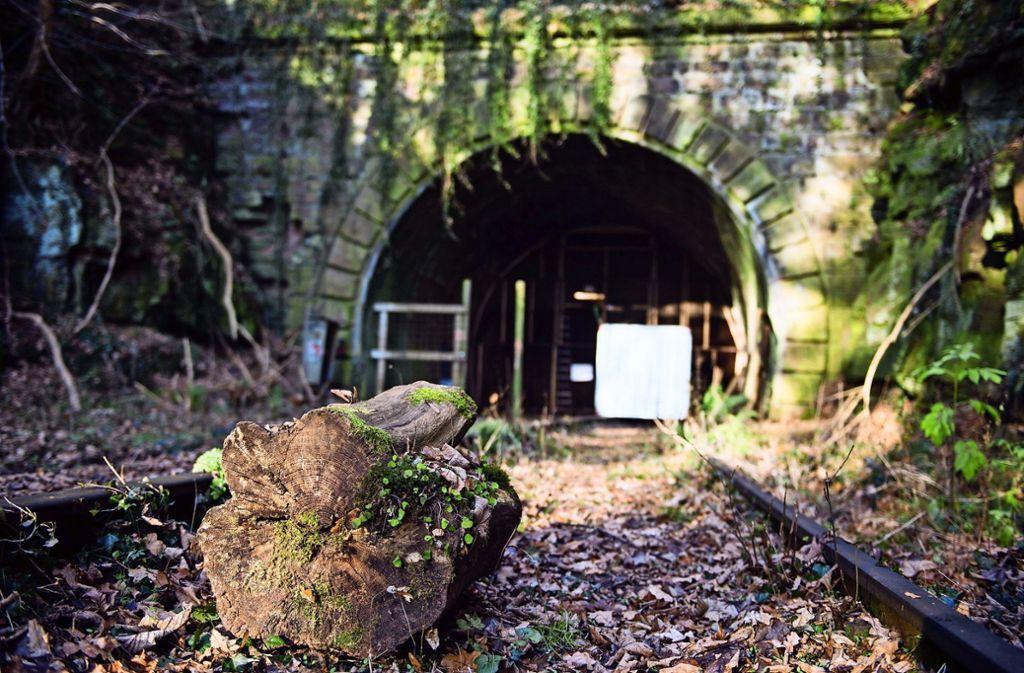 Noch gehört die alte Schwarzwaldbahn, hier am Hirsauer Tunnel, weitgehend der Natur. Doch das wird sich bald ändern. Die Hesse-Bahn nimmt Fahrt auf. Foto: dpa/Lino Mirgeler
