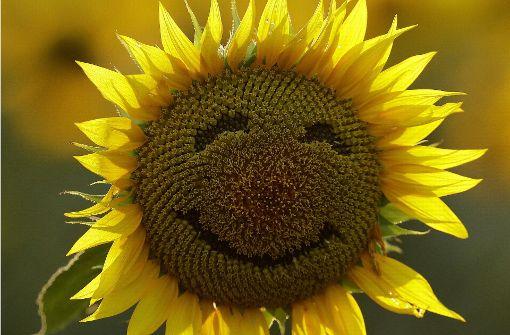 Fröhliche Bilder für mehr Lachen im Alltag