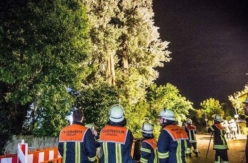 Blitz spaltet Baum
