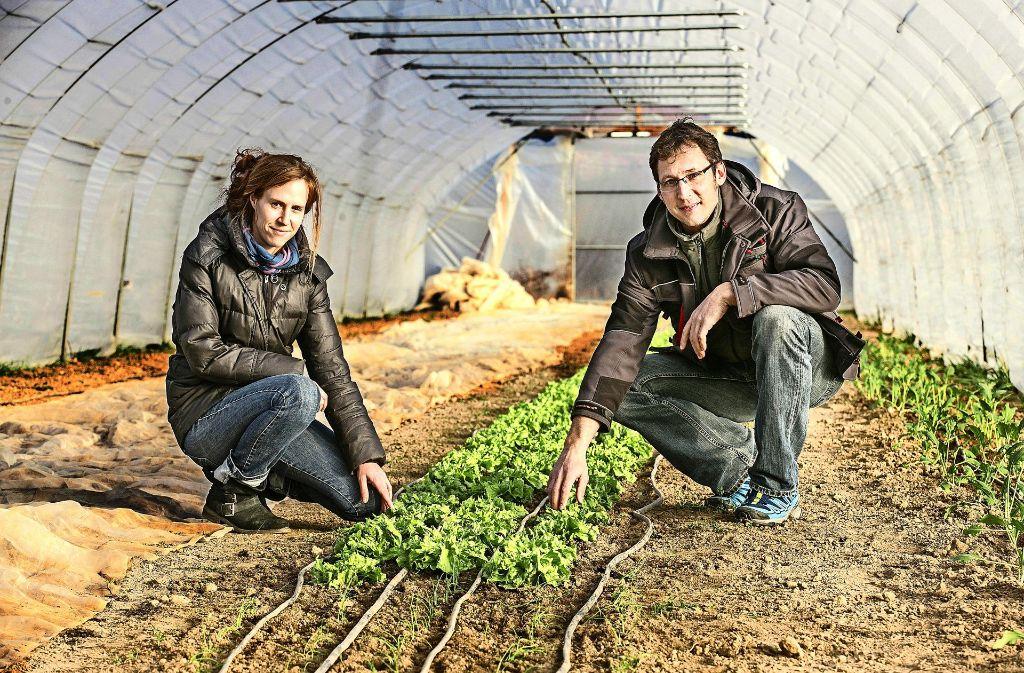 Damaris und David Traub bewirtschaften den Hopfenhof. Im Frühbeet wächst derzeit unter anderem Endivien-Salat. Foto: Horst Rudel