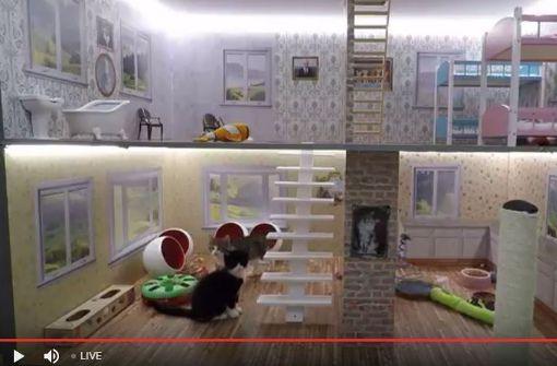 Diese Katzen-Reality-Show macht süchtig