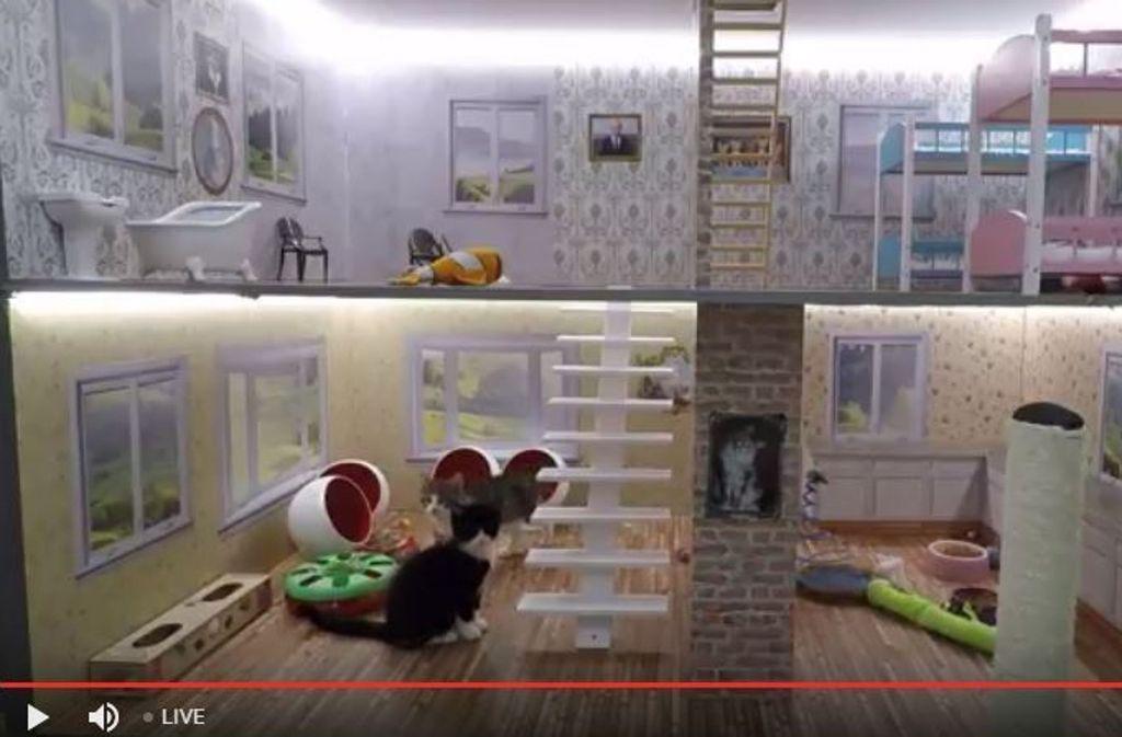 """Die Katzen von """"Keeping Up With the Kattarshians"""" toben durch ein überdimensionales Puppenhaus. Foto: Screenshot Youtube / Nútíminn"""