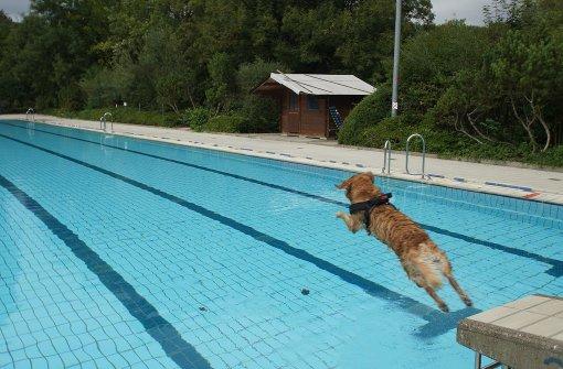 Freibad kommt auf den Hund
