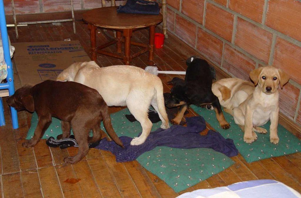 Das von der US-Drogenvollzugsbehörden DEA zur Verfügung gestellte Aufnahme zeigt Hundewelpen, die von einer Farm in Kolumbien gerettet wurden, wo sie für den Drogenschmuggel vorgesehen waren. Foto: dpa