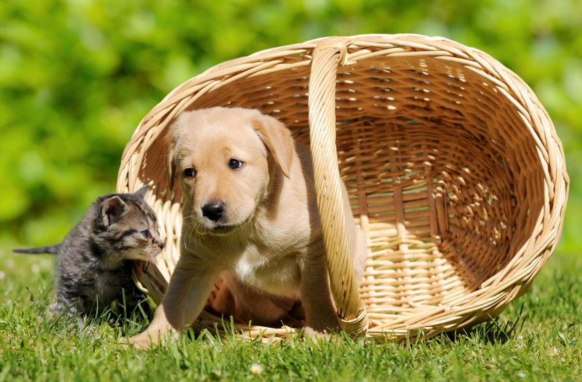 Hund oder Katze: Was soll's sein? Foto: Adobe/Carola Schubbel