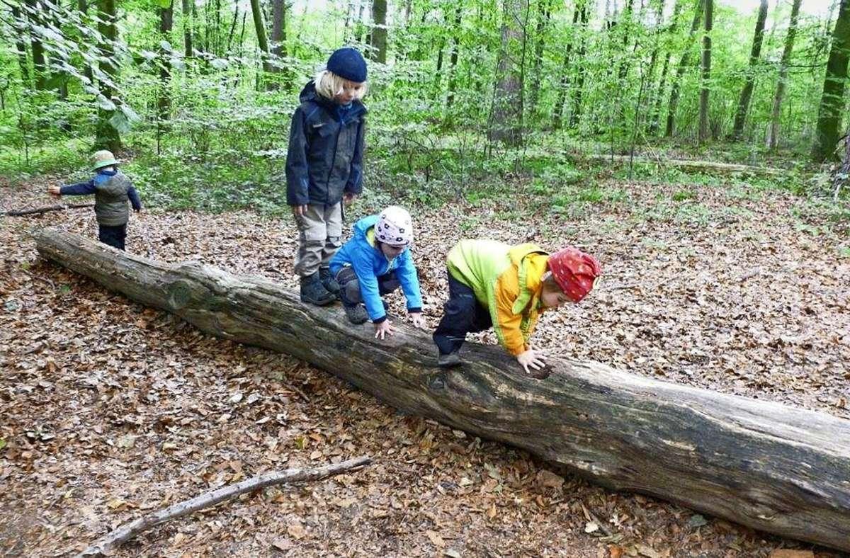 Was die Schöckinger Buntspechte im Wald machen? Auf Baumstämmen balancieren zum Beispiel. Foto: privat