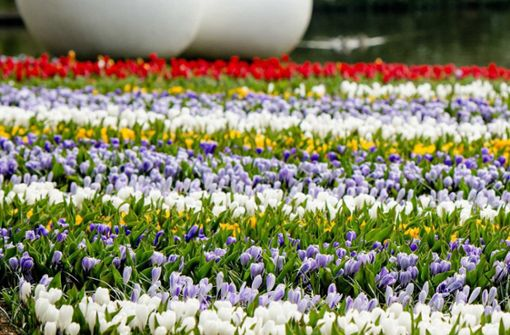 Selfie-Touristen trampeln Blumen platt