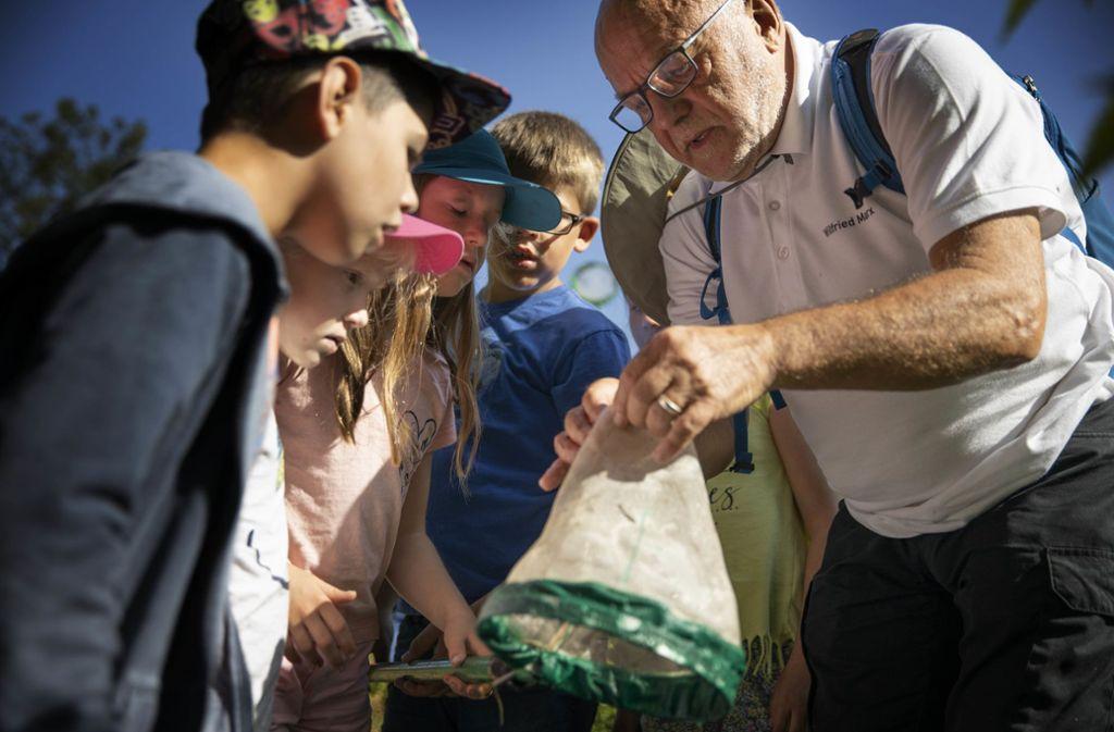 Die Kinder untersuchen mit Wilfried Marx den Inhalt des  Keschers. Foto: