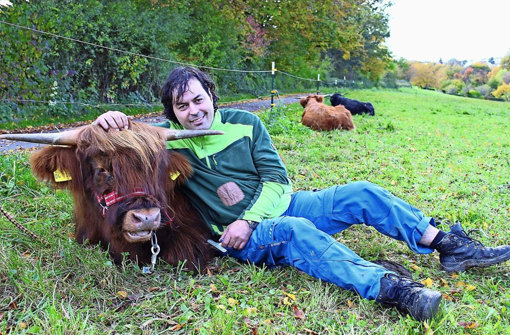 Maximilian Vogt hat schottische Hochlandrinder eingebürgert. Foto: Caroline Holowiecki