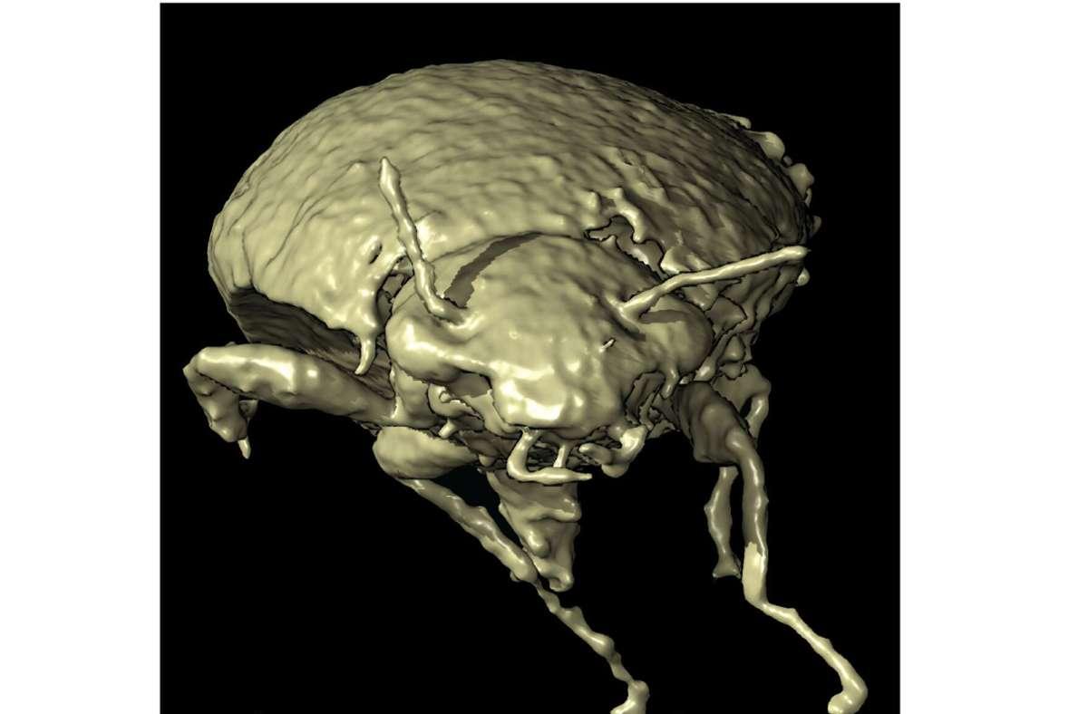 Das Bild zeigt ein 3D-Modell des Insekts mit dem Namen Triamyxa coprolithica. Foto: Qvarnström et al./dpa