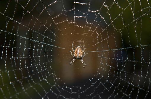 Spinne sorgt für Aufregung in Supermarkt
