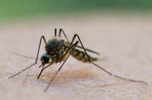Nach dem Gewitter kommen die Mücken