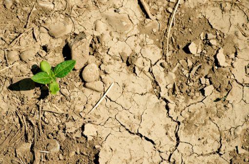 Grüne fürchten mehr Verteilungskämpfe ums Wasser