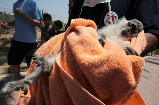 15 verwahrloste Tiere aus Zoo gerettet