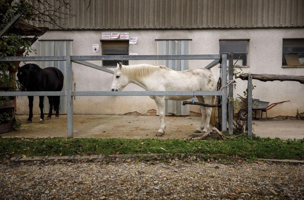 Die Geruchsbelastung durch Pferde ist höher als durch Milchkühe. Foto: Gottfried Stoppel
