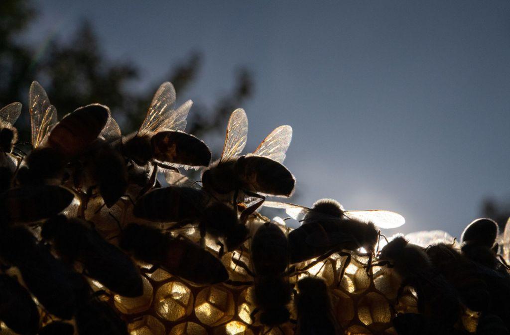 """Unter dem Motto """"Rettet die Bienen"""" läuft seit vergangenem Dienstag in Baden-Württemberg eine Unterschriftenaktion. Foto: dpa/Sebastian Gollnow"""