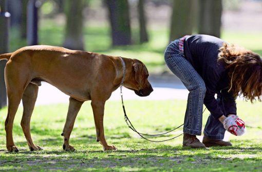 Haufenweise Hundehaufen