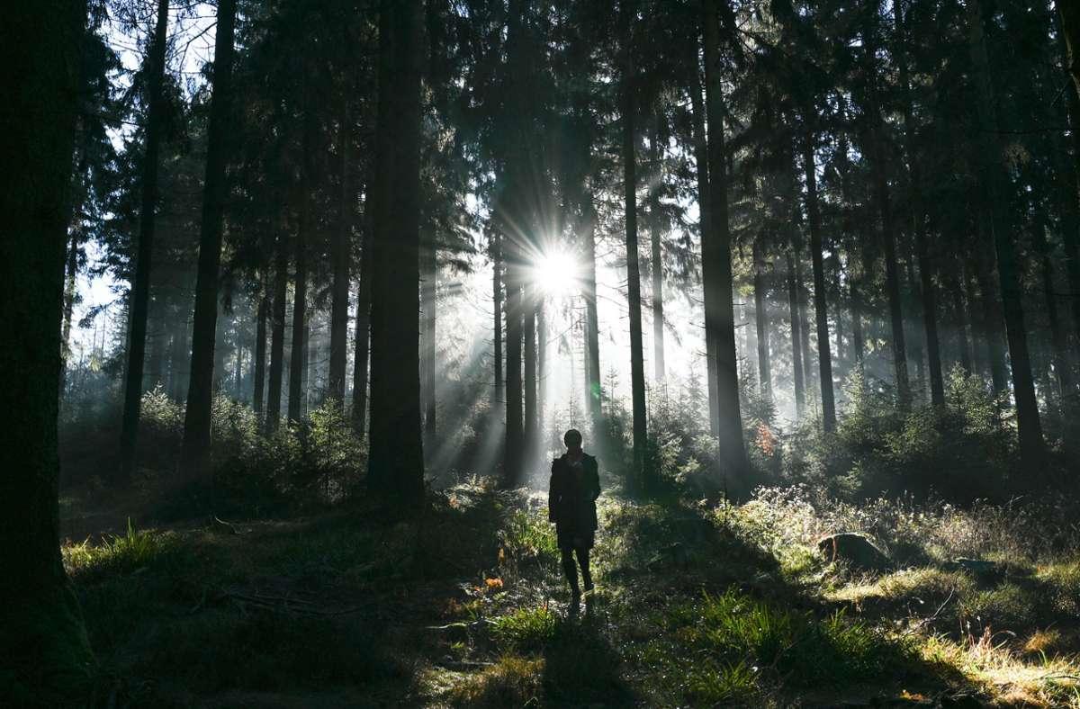 Bereits ein Spaziergang reicht einer Studie zufolge als Bewegung, um die Laune deutlich zu verbessern. Foto: dpa/Arne Dedert