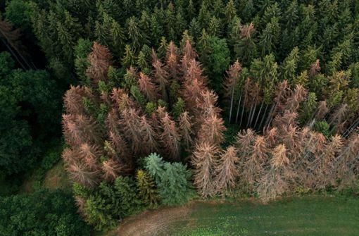 Youtuber will 20 Millionen Bäume bis 2020 pflanzen