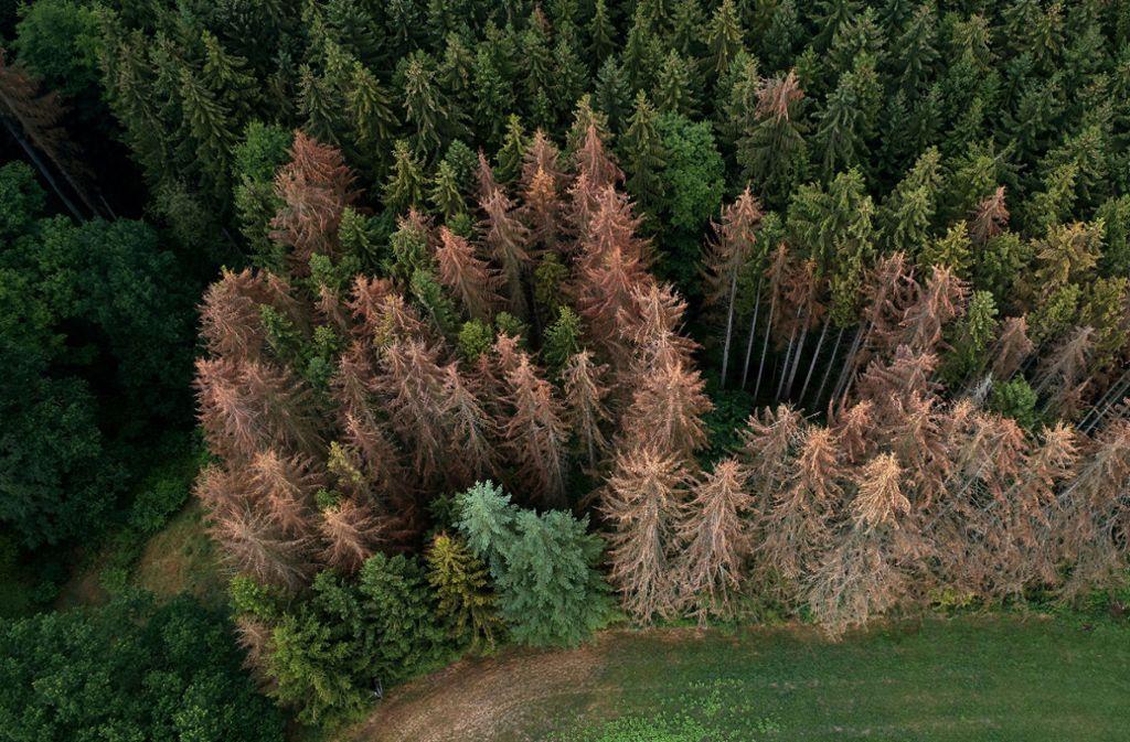 Auch in Deutschland hat der Wald, wie hier bei Koblenz, zunehmend mit Problemen zu kämpfen. Foto: dpa/Thomas Frey