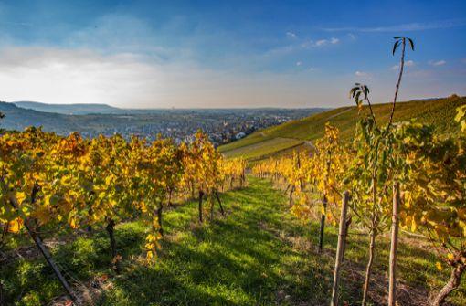 Auf der Höhenroute werden Radler fürs Bergauffahren mit schönen Aussichten etwa auf Weinstadt (Foto) belohnt.