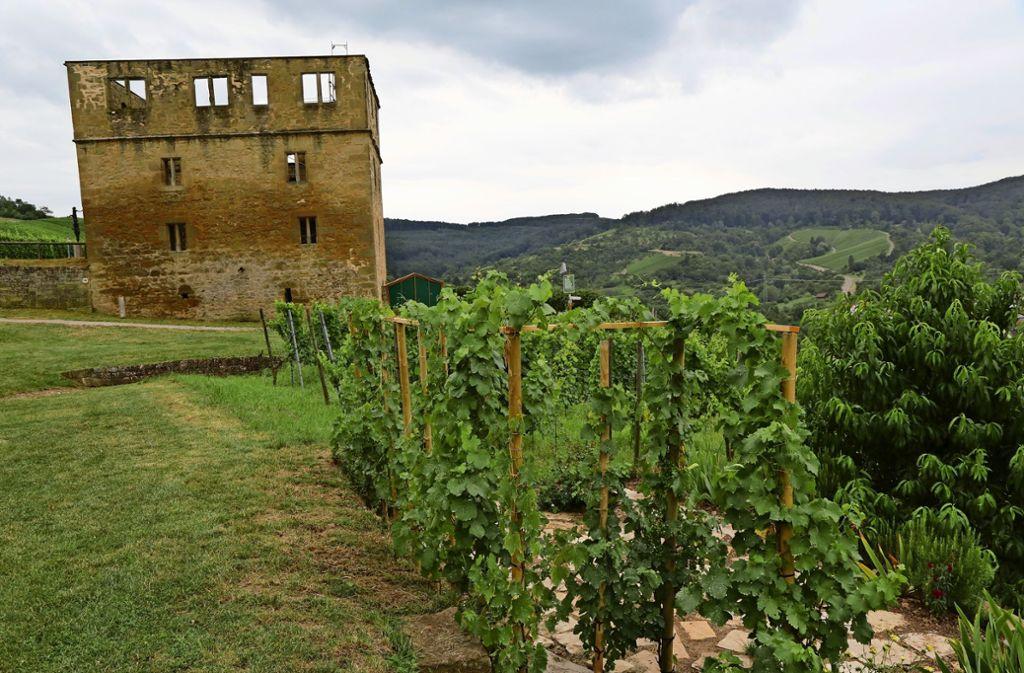 In einem Weinort sind auch Gräber unter Reben denkbar, meint die CDU. Foto: Patricia Sigerist