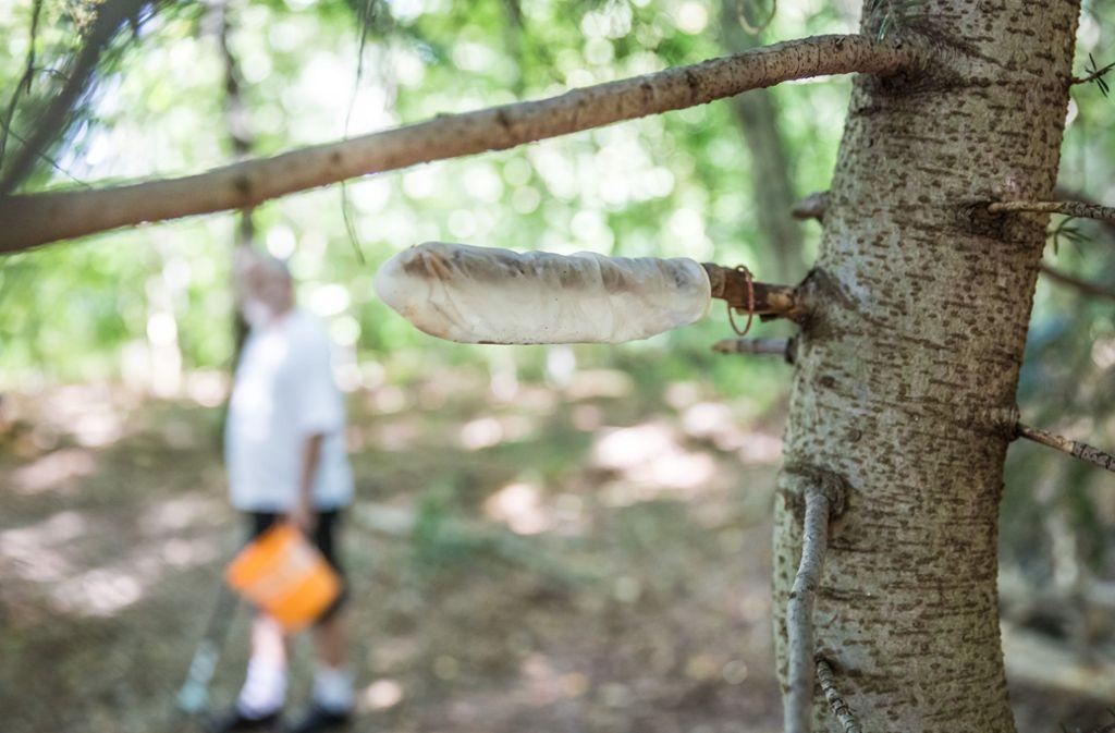Im Wald rund um den Fernsehturm liegt jede Menge unappetitlicher Müll herum – beziehungsweise hängt herum. Foto: Lichtgut/Julian Rettig