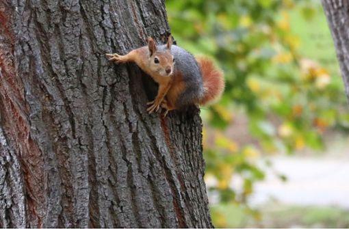 77-Jähriger erschießt Eichhörnchen mit Luftgewehr
