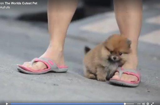 Der süßeste Mini-Hund der Welt