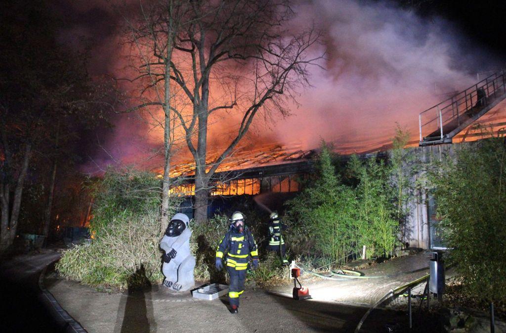 Bei dem Feuer im Affenhaus des Krefelder Zoos starben mehr als 30 Tiere. Foto: AFP/ALEXANDER FORSTREUTER