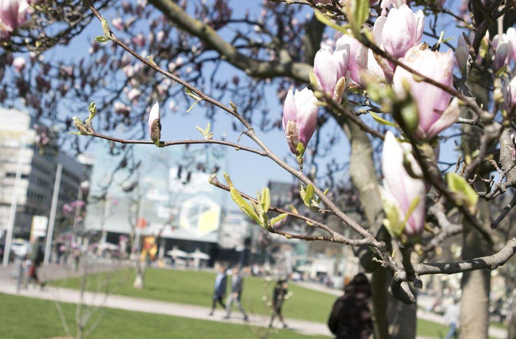 Erste Knospen erblühen im Schlosspark Stuttgart. Foto: 7aktuell.de/Andreas Friedrichs