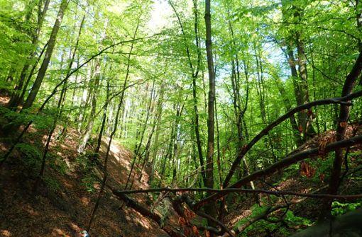 Mehr Mitspracherecht für Bürger beim Thema Wald