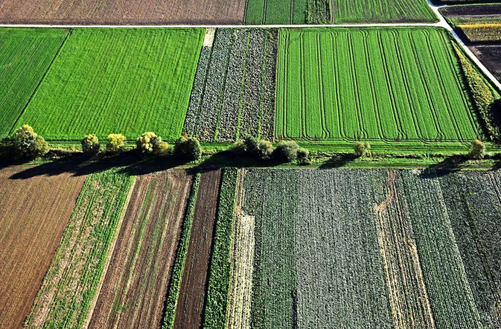Die Anbaufläche für das Filderkraut ist im Laufe der Jahre kleiner geworden. Foto: Malte Klein
