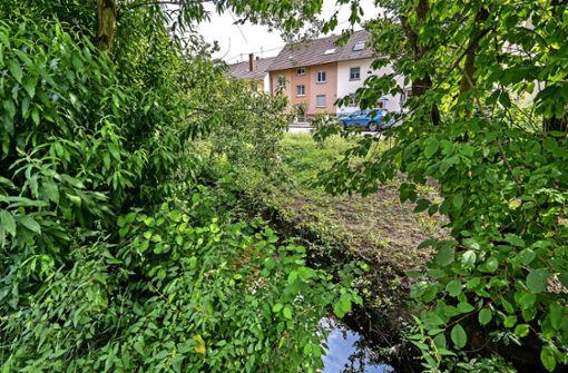 Wasserlauf soll umliegende Häuser nicht mehr fluten
