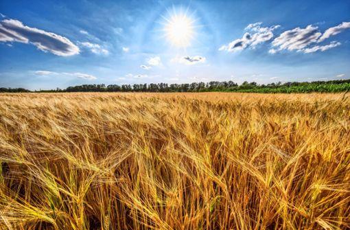 Erschreckende Folgen für Felder