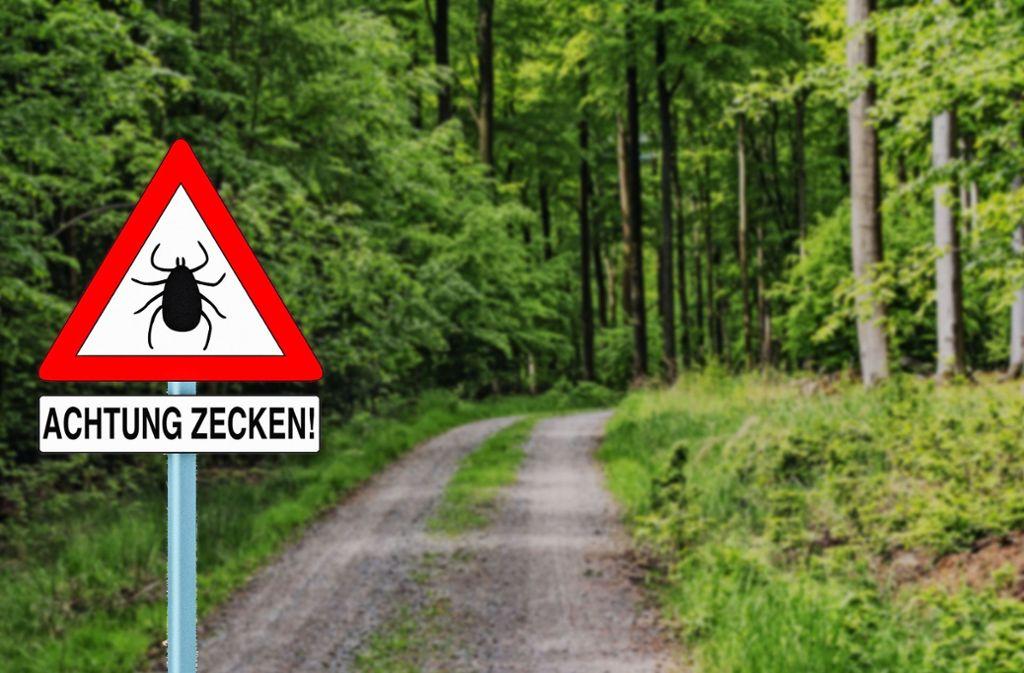 Das Infektionsrisiko mit dem FSME-Virus ist in den Wäldern Baden-Württembergs besonders hoch. Foto: DoraZett/AdobeStock