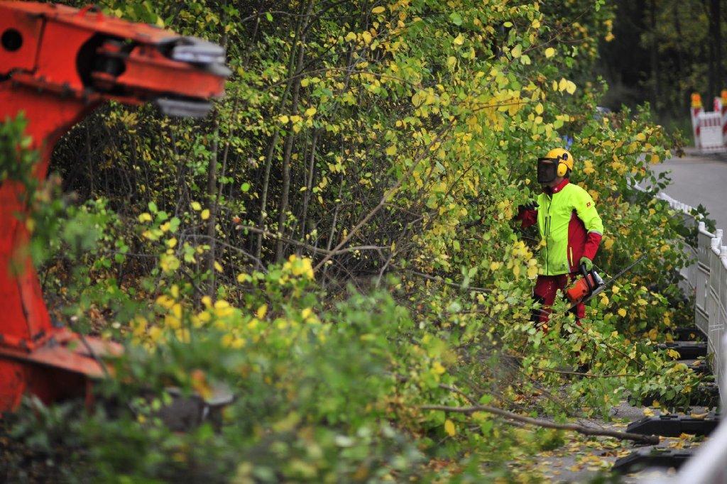 Am Dienstagmorgen hat die Bahn im Rosensteinpark damit begonnen, Bäume für das umstrittene Milliardenprojekt Stuttgart 21 zu fällen. Bilder von den Baumfällarbeiten gibt es in unserer Fotostrecke. Foto: 7aktuell.de