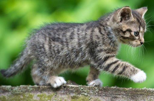 Katze ist beliebtestes Haustier