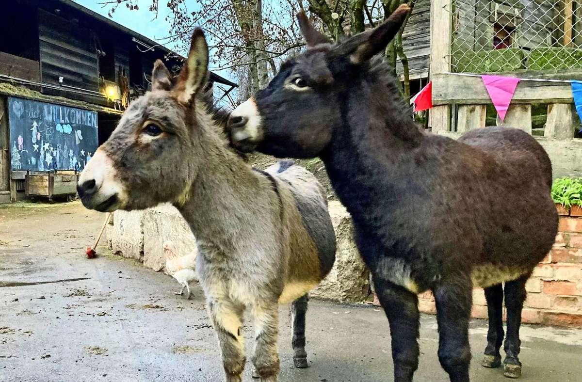 Seit Kurzem befreundet und schon unzertrennlich: Minou (rechts) und Emil. Foto: z