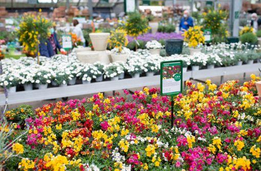 Blumenläden dürfen voraussichtlich zum 1. März öffnen