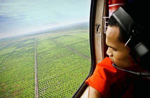 Die mühsame Abkehr vom Palmöl