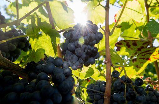 Aus dem Weindorf wird eine  Auslese