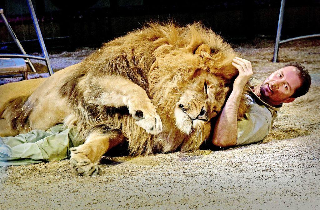 Dompteur Martin Lacey: Auch wenn der Löwe schmust, bleibt er   gefährlich. Foto: Wolfgang Reinhold