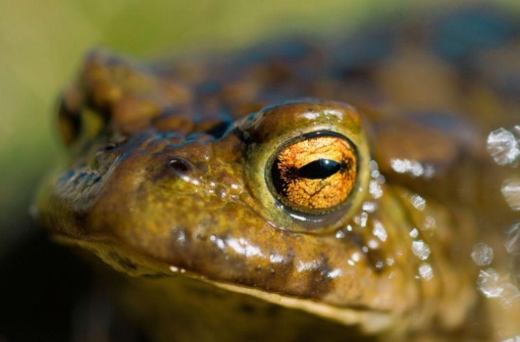 Bürger ärgern sich darüber, dass der Landesvater medienwirksam Biotope einweiht, während es in Heumaden seit vier Jahren ein Problem mit Amphibien gibt. Foto: dpa
