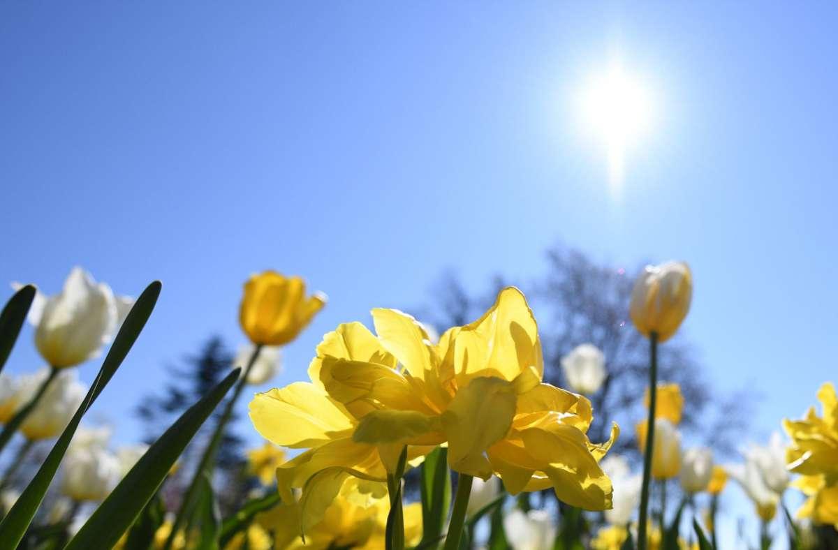 Am Osterwochenende gibt es in Baden-Württemberg viel Sonnenschein. Foto: dpa/Patrick Seeger