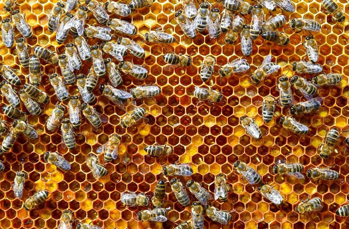 Unbekannte haben es bei Ravensburg auf Bienenvölker abgesehen. (Symbolfoto) Foto: dpa/Patrick Pleul