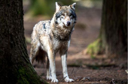 Neue Tiere im Land – die Rückkehrer