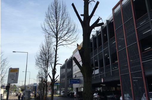 Scharfe Kritik an Baumschnitt in Mühlhausen