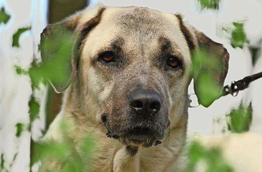 Hund tötet Seniorin