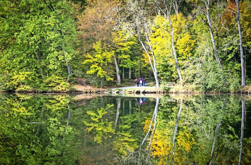 Der Katzenbachsee ist  ein Idyll. Früher dienten er und der Steinbachsee  der Trinkwasserversorgung, heute sind sie für die Netze BW eine finanzielle Belastung. Foto: Lichtgut/ Zweygarth